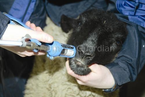 Έως 23 Γενάρη τα χαρτιά για Κτηνίατρους Εκτροφής