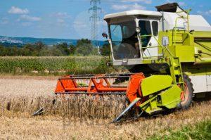 harvesting-corn