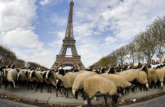 Στα δικαστήρια για τις χαμηλές τιμές γάλακτος οι Γάλλοι κτηνοτρόφοι